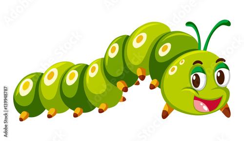 Fotografía Green caterpillar crawling on white background