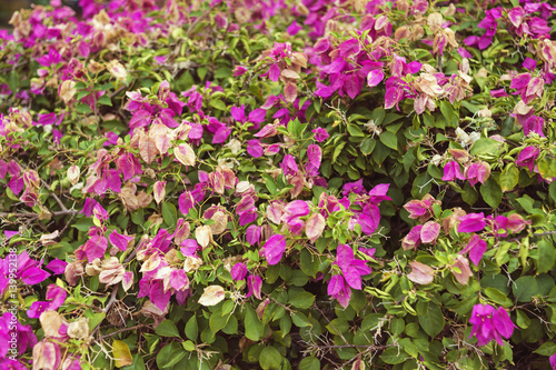 Pink Blossom Bush