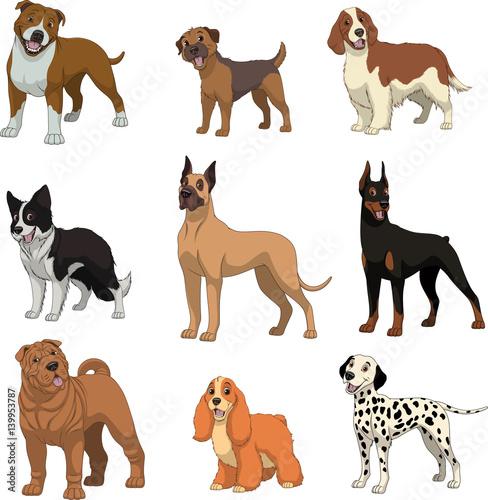 Foto  Set purebred dogs.