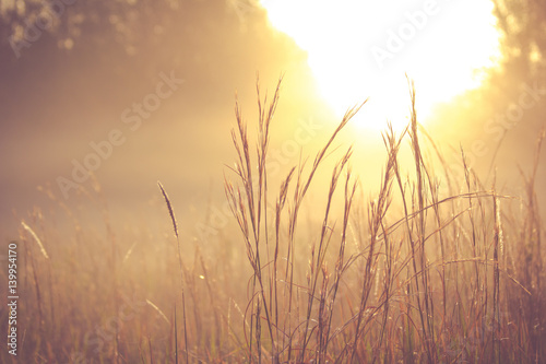 Poster de jardin Morning Glory Grass field in the morning