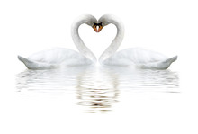 Images Of Two Swans On Lake