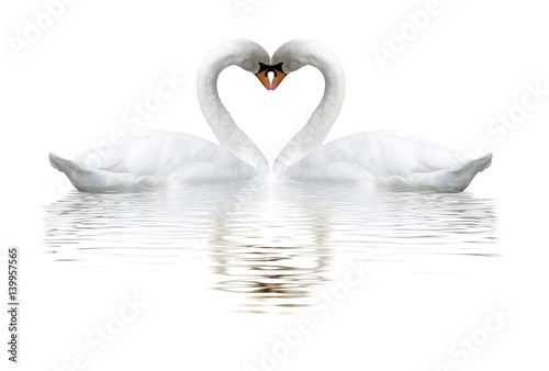Cadres-photo bureau Cygne images of two swans on lake