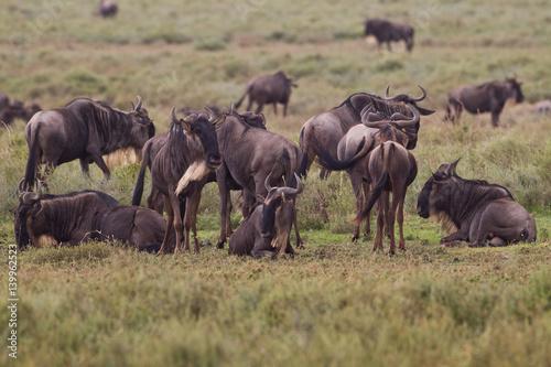Foto auf Gartenposter Reisfelder Animal