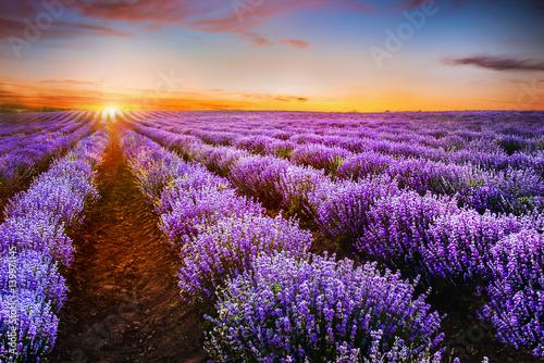 Foto op Plexiglas Platteland Blooming lavender field under the red colors of the summer sunse
