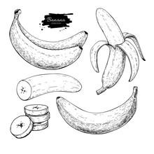 Banana Set Vector Drawing. Iso...