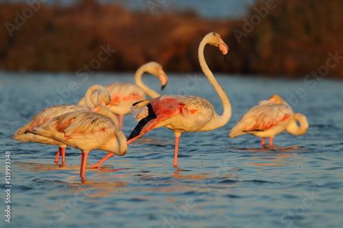 Photo Stands Flamingo Wildlife