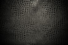 Crocodile Leather Texture Background. Macro Shot. Stock Image.