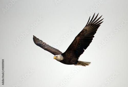 In de dag Eagle Wildlife