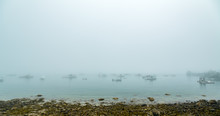 Foggy Morning On Schoodic