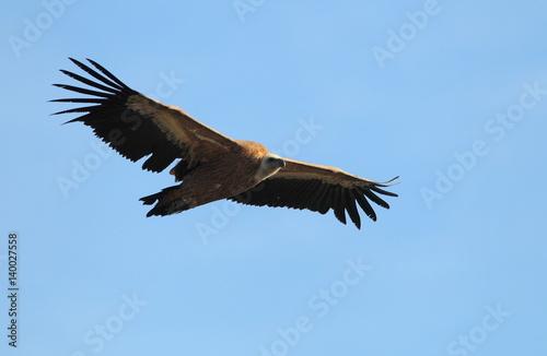 In de dag Eagle animal
