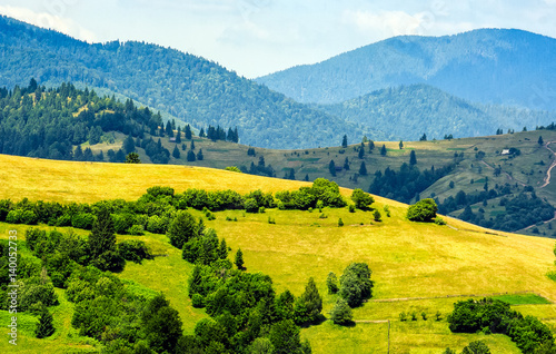 forest on a mountain hillside in rural area - 140052733