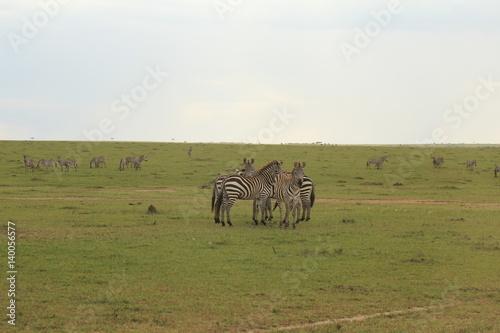Montage in der Fensternische Afrika Zebras in Kenya