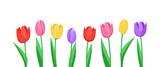 Fototapeta Tulipany - Banner mit Tulpen (in Weiß)