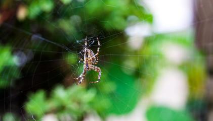 Macro Spider on Web #3