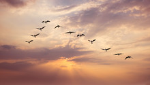 Birds At Sunrise Or Sunset Nature Concept