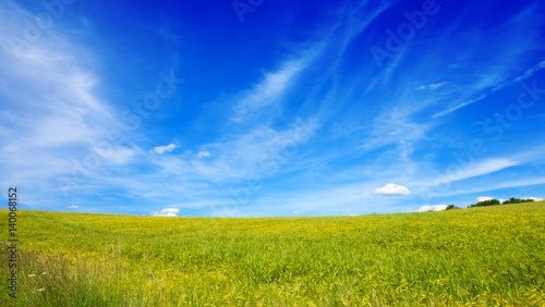 Foto op Canvas Donkerblauw Field of grass and blue sky: