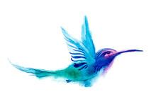 Watercolor Blue Humming-bird F...