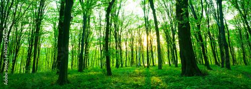 Fototapeten Wald Forest in morning