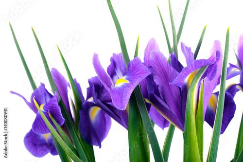 Papiers peints Iris Purple iris flowers
