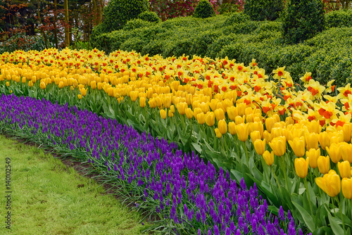 Photo Stands Narcissus Muscari Armeniacum, Tulipa Candela, Narcis Fortissimo
