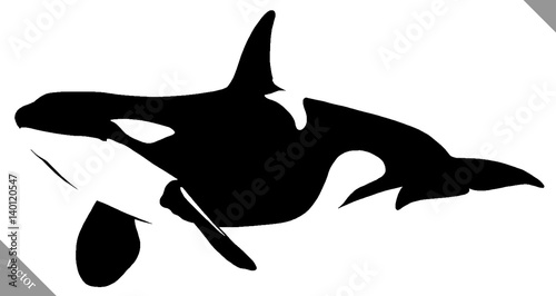 Fotografie, Obraz  black and white linear paint draw killer whale illustration