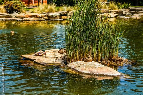 Fotografie, Obraz  Letterman Digital Arts Center Recycled Water Pond at Lucas