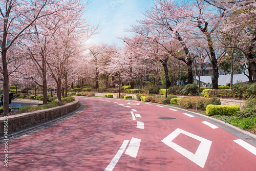 Plakat TOKYO MIDTOWN, JAPONIA - 1 KWIETNIA: Spring sakura cherry blossoms
