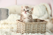 Cute Kitten In Wicker Basket At Home