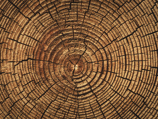 Fototapetathe age of a tree cut down , the texture of the logs