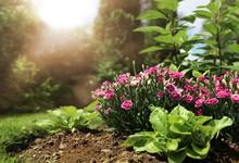Peaceful Spring Garden Full Of Sunlight