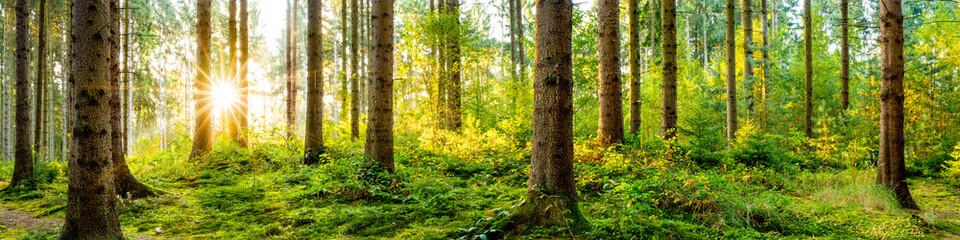 Fototapeta Idyllisches Wald Panorama bei Sonnenaufgang