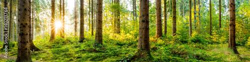 Fotobehang Bossen Idyllisches Wald Panorama bei Sonnenaufgang