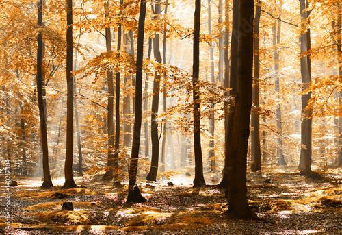 Cadres-photo bureau Foret brouillard forest