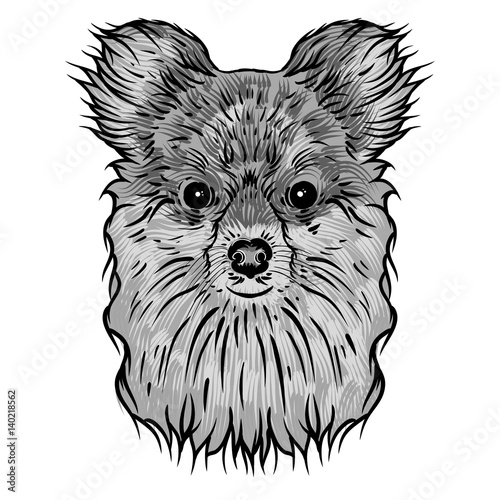 Photo sur Toile Croquis dessinés à la main des animaux Portrait of Pomeranian doggy. Hand drawn dog illustration. T- shirt and tattoo concept design in black white. Vector.