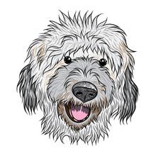 Portrait Of Labradoodlen Puppy. Hand Drawn Dog Illustration. T- Shirt And Tattoo Concept Design. Vector.