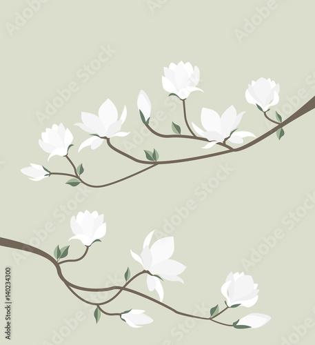 Photo Vector magnolia flowers