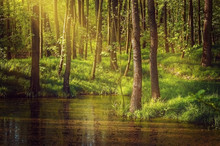 Landscape With Deciduous Forest And A Pond. Spring Forest In Sunny Day.