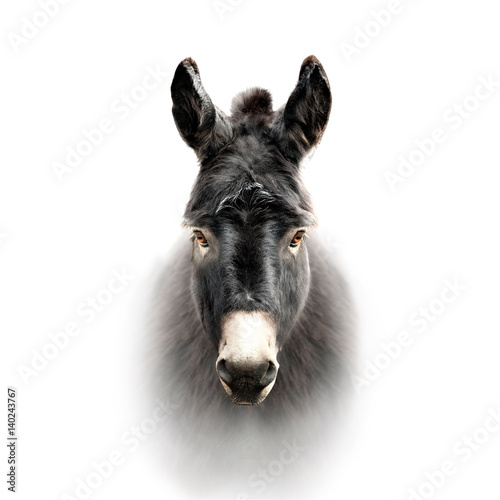 Poster de jardin Ane donkey face isolated on white