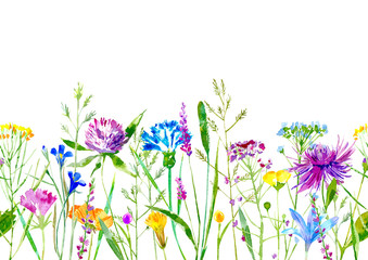 Panel Szklany Podświetlane Do łazienki Floral seamless border of a wild flowers and herbs on a white background.Buttercup, clover,bluebell,vetch,timothy grass,lobelia,spike. Watercolor hand drawn illustration.
