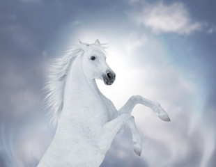 Portrait of the white reared horse on cloud background