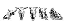 Cow And Bull Skull Set.