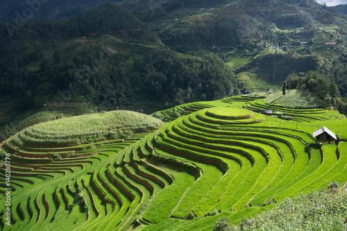 Papiers peints Les champs de riz Green Terraced ,Rice Field motion by strong wind,motion blur