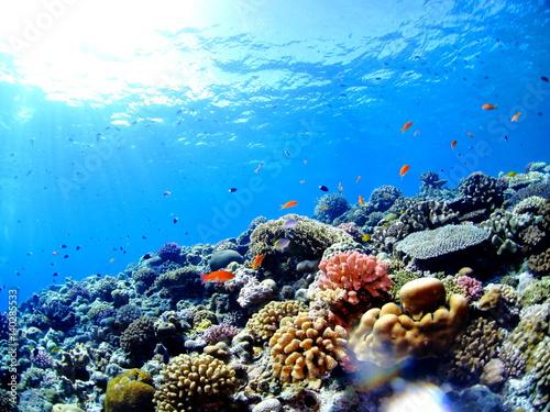 カラフルな珊瑚礁