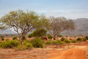 Road through the savannah of Kenya with animals and plants