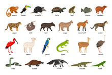 Large Set Of Animals Of South America