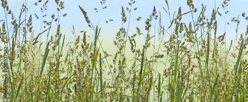 szczegolowo-kwitnace-trawy-alergeny
