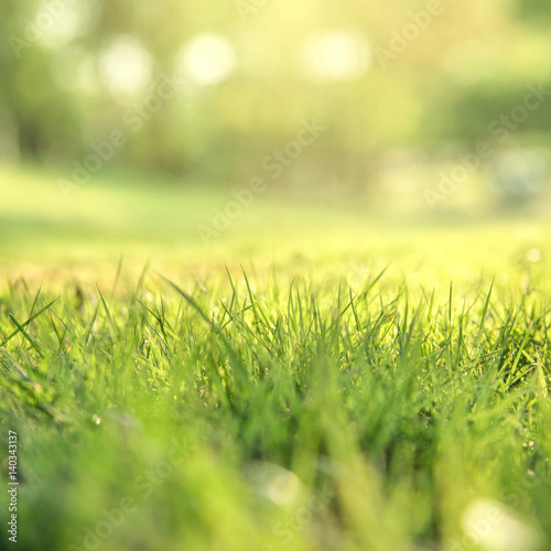 Foto auf Leinwand Gelb Schwefelsäure Spring and nature background concept, Close up green grass field with blurred park background and sunlight.