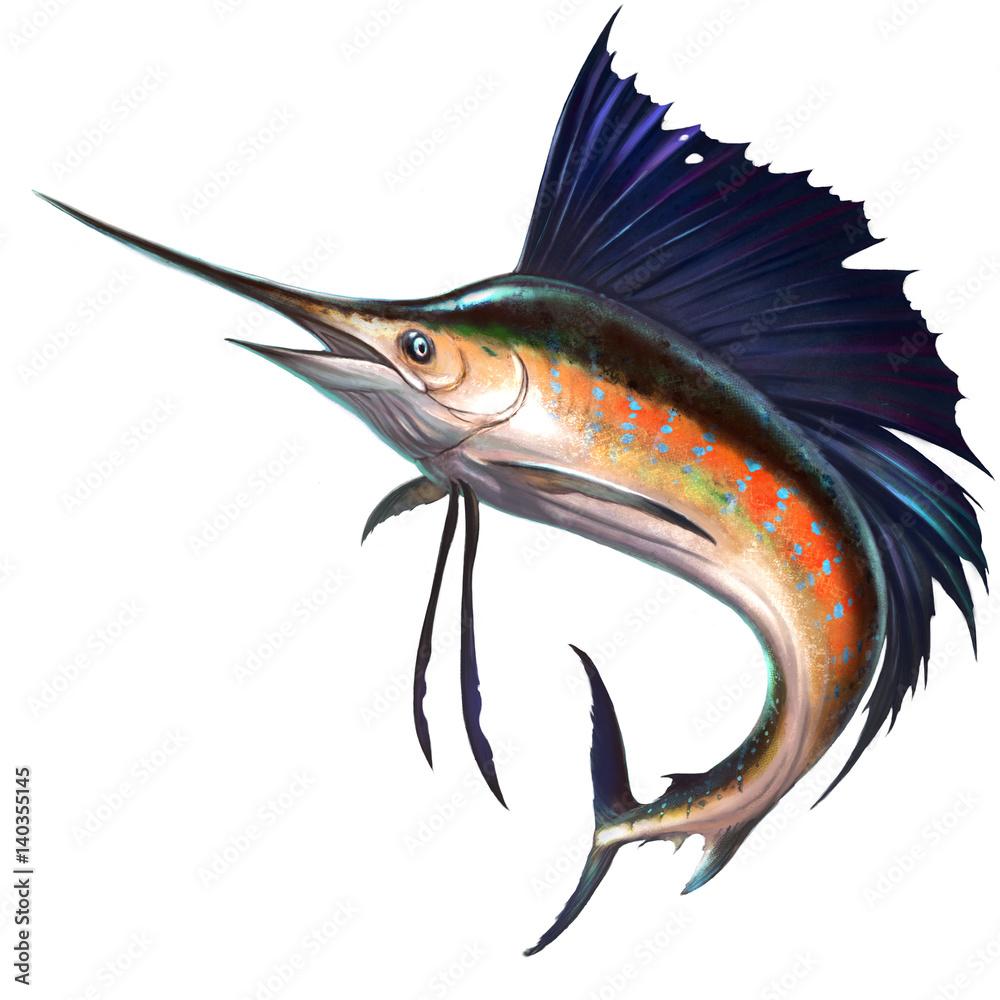 Sailfish on white illustration