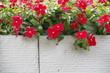 Fiori rossi su fondo bianco