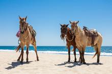 Three Horses On A Beach